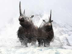 Prehistoric World, Prehistoric Creatures, Stone Age Animals, Rhino Animal, Primitive Pictures, Extinct Animals, Animals And Pets, Wild Animals, Rhinoceros