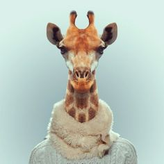 stylish giraffe
