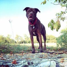 Come play with me! - Far West Dog Park - Austin, TX - Angus Off-Leash Come Play With Me, Le Far West, Dog Park, Austin Tx, Cute Dogs, Parks, Texas, Puppies, Cubs