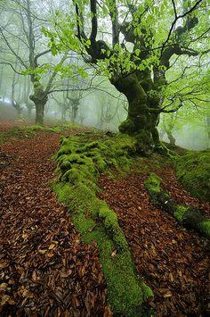 Spring in Basque Fores - Parque Natural de Gorbeia, Basque, Spain