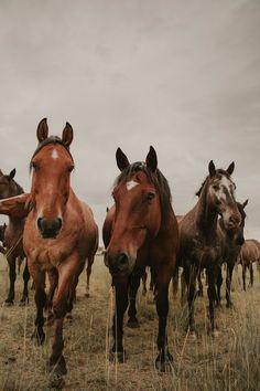 Cute Horses, Pretty Horses, Horse Love, Cute Horse Pictures, Horse Photos, Most Beautiful Horses, Animals Beautiful, Horse Wallpaper, Cute Wild Animals