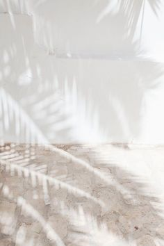 light effects shadow palm trees summer vibes soft palette white neutral (source unknown) Pinterest Color, Outfits In Weiss, Foto Top, Shades Of White, White Aesthetic, Summer Aesthetic, Aesthetic Design, Light And Shadow, Sun Shadow