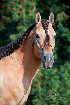 Horse Photography by Alexia Khruscheva