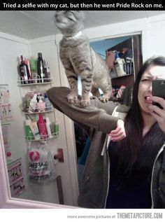 Simba Cat…I think her face in the picture is the funniest part