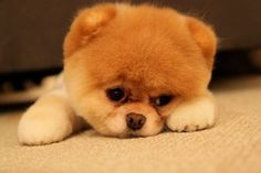 しょんぼり………    犬。