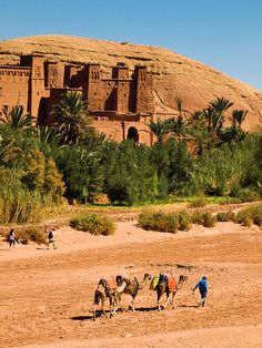 Mini Caravan | Ksar de Ait Ben Hadu, Morocco | Maroc Désert Expérience http://www.marocdesertexperience.com