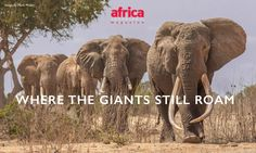 Where the Giants Still Roam. The greatest African elephant census in history. Kruger National Park, National Parks, Tanzania, Kenya, David Sheldrick Wildlife Trust, History Taking, Trophy Hunting, Wild Creatures, Photography Competitions