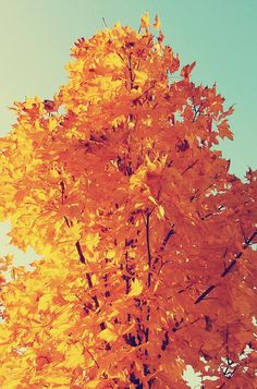 Colorful Autumn Tree Leaves iPhone 6 Plus HD Wallpaper