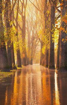 Secret Place ~ Dreamy Nature