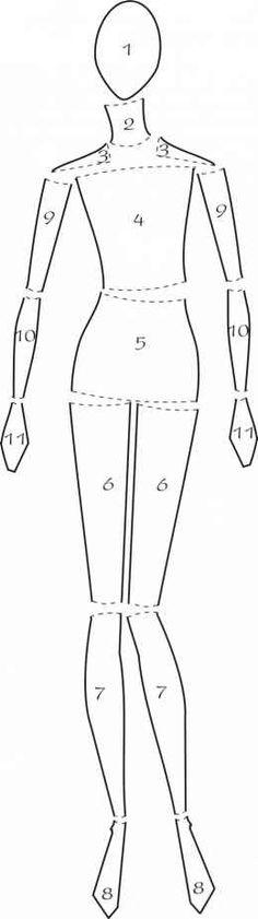 Eleven body parts Figure Illustration