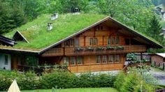 Imoveis Um bom Negócio: Telhados verdes são uma aposta bonita e sustentáve...