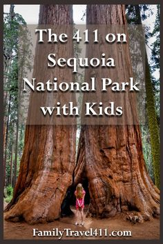 Sequoia National Park with Kids Family Vacation Guide – Holiday and camping ideas California With Kids, California Vacation, Family Road Trips, Family Travel, Sequoia National Park California, Giant Sequoia National Monument, Family Vacation Destinations, Travel Destinations, Family Vacations