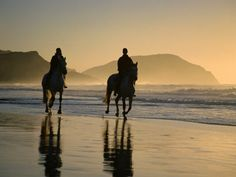 Once, when I was little I followed horse tracks on the beach while my dad was surfing until I found the horses and riders...they let me ride one of them on the beach and I'll never forget it :]