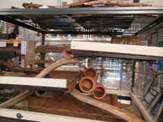Degu Home in a CN, but there are some great ideas here for rats too!