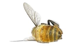 The continuing loss of our bee population is of deep concern - these tireless workers are very much a cornerstone to our food &  crop production.