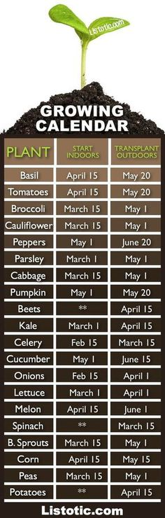 Plant Your Vegetable Garden ⋆ Listotic Vegetable garden growing calendar with starting and transplanting dates. If only I had a green thumb.Vegetable garden growing calendar with starting and transplanting dates. If only I had a green thumb. Veg Garden, Garden Types, Lawn And Garden, Terrace Garden, Veggie Gardens, Vegetables Garden, Garden Planters, Potager Garden, Edible Garden