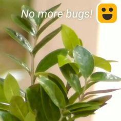 Inside Plants, Real Plants, Plants In Pots, Upside Down Plants, Flowering House Plants, Growing Plants Indoors, Live Plants, House Plants Decor, Plant Decor