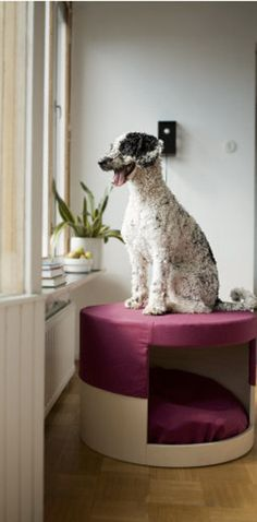 This purple bed / window looker. | 36 Pieces Of Mod Pet Furniture Nicer Than Your Actual Furniture