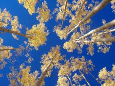 "BLOG: Poetry - ""Fire & Gold"" by Teryn O'Brien.   It's that time of year again. Autumn colors are beginning to dawn. In Colorado, fall is beautiful because of its aspen trees, which seem to glow in golden fire when the sunlight catches them.  Here is a poem I wrote as a simple tribute..."