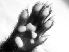 Ferret Feet! #ferret #furet