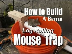 How to make a better log rolling bucket mouse trap. This Log Rolling bucket mouse trap is inexpensive, easy to build, can catch multiple mice without having . Mouse Trap Diy, Best Mouse Trap, Best Pest Control, Bug Control, Homemade Mouse Traps, Bucket Mouse Trap, Five Gallon Bucket, Step Function
