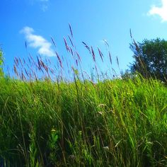 #russia #izhevsk #summer #nature #heaven #россия #ижевск #лето #небо #природа Instagram Posts, Plants, Green Nature, Plant, Planets