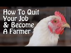▶ Quit Your Job and Become a Farmer. 7 Small Farm Ideas, from Organic Farming to Chickens & Goats. - YouTube