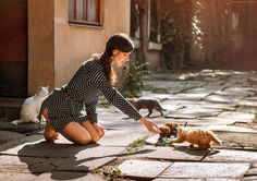 """Cats - Paid lessons retouching.There are ready-made video tutorials on photo retouching of color and black-and-white portraits. My email - begmaD_photo@mail.ru Join me on  <a href=""""https://www.facebook.com/dima.begma/"""">My Facebook</a> Join me on <a href=""""https://vk.com/begmadima"""">My VK</a> Join me on <a href=""""https://instagram.com/dima_begma/"""">My Instagram</a> Join me on <a href=""""https://www.flickr.com/photos/131604271@N08/"""">Flickr</a>"""