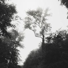 """""""Man is the only creature that refuses to be what he is.""""   Albert Camus  #tmoosoul #emotional_dark_pictures #follow_the_grey_sky #mode_emotive #renegade_dark #pocket_bnw #bnw_rose #darknature #darkforest #woods #divine_forest #misty #mist_vision  #chasingfog #mistyfoggymilkymoody #liveauthentic #stayandwander #morningfog #aloneinthewoods #moodygrams #darkwoods #moodylight #darkphoto #darkside #forestporn #treescape #foggymorning #fiftyshades_of_nature #naturelovers #pocket_treespictures…"""
