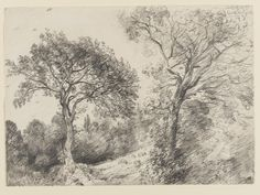Trees in West End Fields, Hampstead John Constable