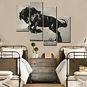 Stretched Canvas Art Animal Jumping Horse Set... – USD $ 89.99
