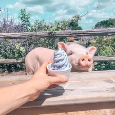"LIVEKINDLY on Instagram: ""Vegan treats for Christopher! 🐷🍦💝Credit: @christopher_the_pig⠀ .⠀ .⠀ .⠀ .⠀ .⠀ #vegan #veganism #vegansofig #vegansofinstagram…"" Cute Animal Photos, Vegan Treats, Veganism, Cute Animals, Instagram, Pretty Animals, Cutest Animals, Cute Funny Animals, Cute Animal Pictures"