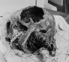 The Neolithic stone age culture in Denmark succeeded the Ertebølle culture of Hunter's Stone Age. The period is also called Younger Stone Age. It is especially characterized by the start of agriculture in Denmark Denmark History, Stone Age, Agriculture, Skull, Kranium, Animals, Sweden, Bones, Death