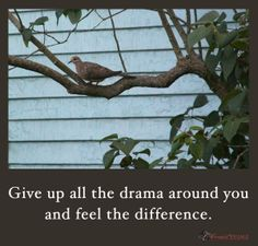 Give up all the drama around you and feel the difference.