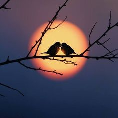 Bird couple in the sunset Beautiful Moon, Beautiful Birds, Animals Beautiful, Sunset Photography, Creative Photography, Popular Photography, Photography Magazine, Photography Business, Photography Poses