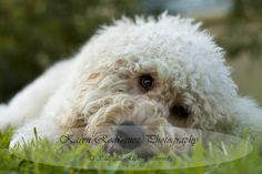 Karen Rodriguez Pet Photography of Central Florida: Because Every Pet Has A Story To Tell