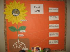 Science TEKS 2.10B  physical characteristics of plants