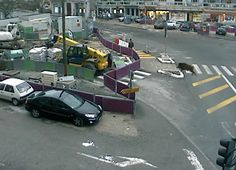 Le sanglier qui terrorisa le centre-ville pris en flag par une caméra de besac.com ...   http://www.estrepublicain.fr/faits-divers/2012/12/08/un-sanglier-dans-la-ville