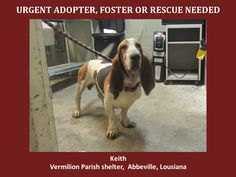 ***SUPER URGENT!!!*** - PLEASE SAVE ME!! - EU DATE: 7/23/2014 -- keith  Breed: Basset Hound  Age: Adult Gender: Male  Size: Large,  - animalaidvermilion@gmail.com or (337) 366-0212 or visit our website animalaidvermilionarea.com for more information
