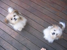 oh....I need these two little Buds . . .