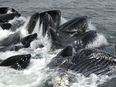 The Best Time for Whale Watching in Alaska