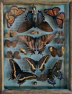 Entomology: Collection of Titian R. Peale, a noted 19th century entomologist, from NY Times