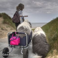almost there Big Puppies, Big Dogs, Almost There, Old English Sheepdog, Four Legged, Adorable Animals, Animals And Pets, My Best Friend, Dog Cat