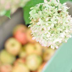Guten Morgen ☀️, die letzten Äpfel sind geerntet. 🍎🍎🍎 . Ein Applecrumble wäre jetzt perfekt. Und ein bisschen Apfelmus vom Fallobst muss auch sein.  Habt es schön ihr Lieben. #ausmeinemgarten #apfelernte . . . . #apfelliebe #apfel #Apfelbaum #gartenliebe #gartenglück #gardening #gardenlife #gardenlove #countryside #countrygirl #countrygarden #pic #shotwithlove #thehappynow