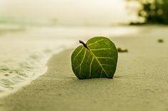 Beach, Leaf, Green, Nature, Summer