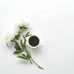Uploaded by Ãsôsh ❀. Find images and videos about white, flowers and coffee on We Heart It - the app to get lost in what you love.