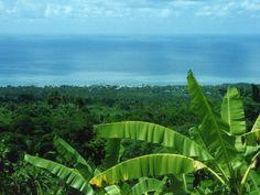 Banana trees on the flanks of the Karthala volcano, on Grande-Comore island, Comoros
