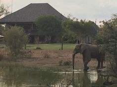 Private Safari, Out Of Africa, South Africa, Golf Courses, Elephant, Tours, World, Animals, The World