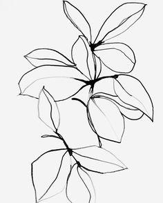 Art dibujos Foliage 0118 - Plant Art Print - Plant Giclee art print by Leigh Viner Art Floral, Art And Illustration, Pattern Illustration, Plant Drawing, Drawing Flowers, Plant Art, Ink Drawings, Clipart, Fine Art Prints