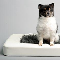 Modern Pet Bed // free shipping
